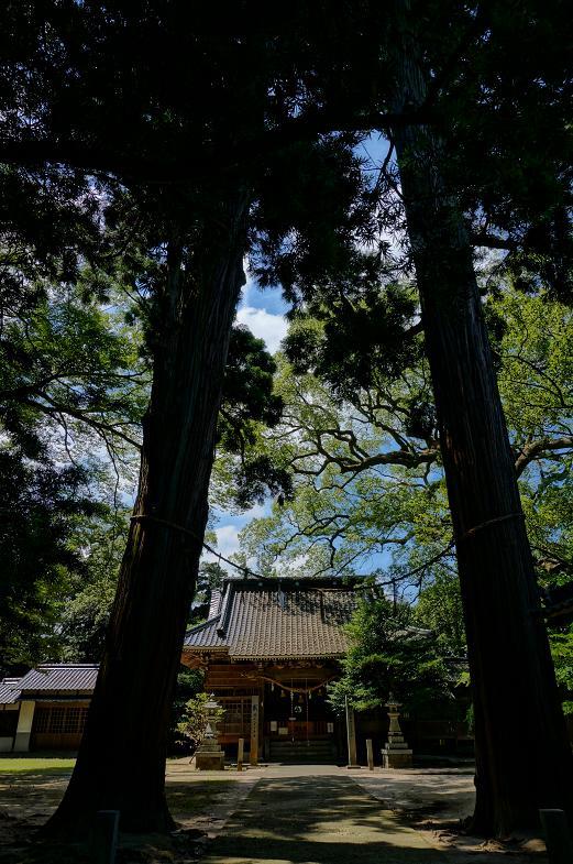 何気に巨木が多い神社.JPG